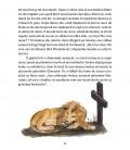 Sfântul Gherasim şi leul